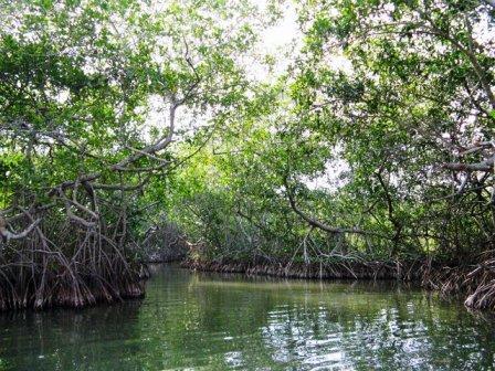 manglares